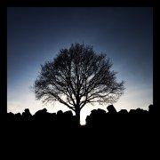 tree aura_by_Th0rNe